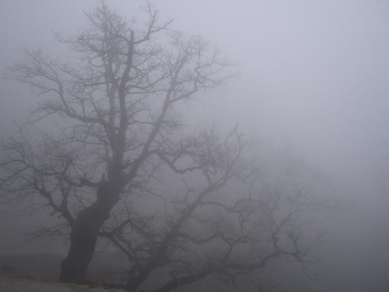 Оранжевый уровень опасности из-за туманов объявлен на утро четверга